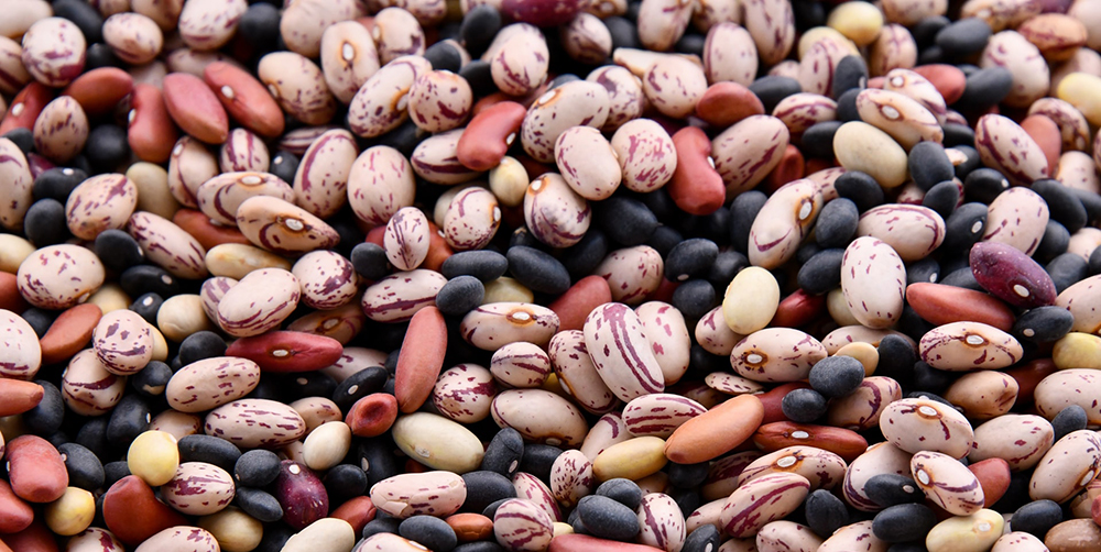Legumes and Beans Compilation Photo (Plant-Based Protein)